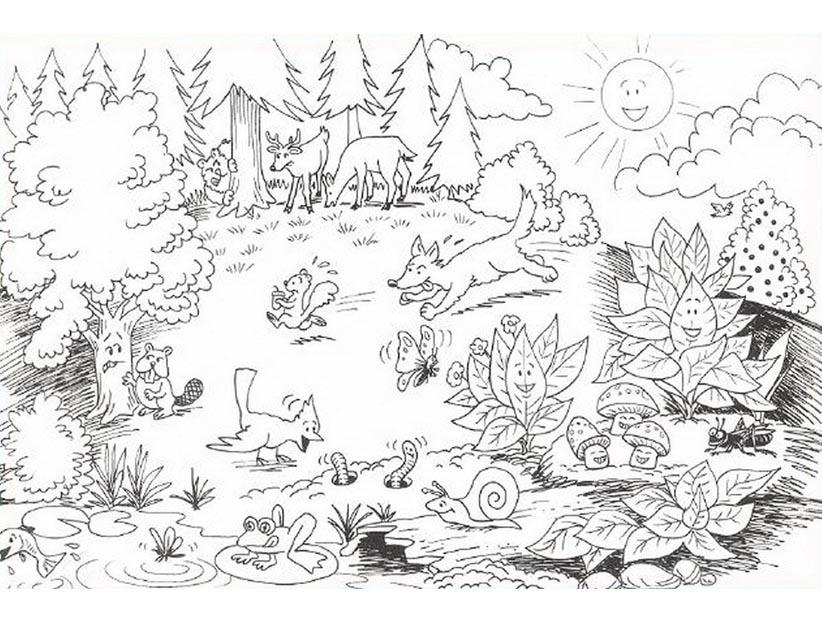 Картинки животных леса раскраски