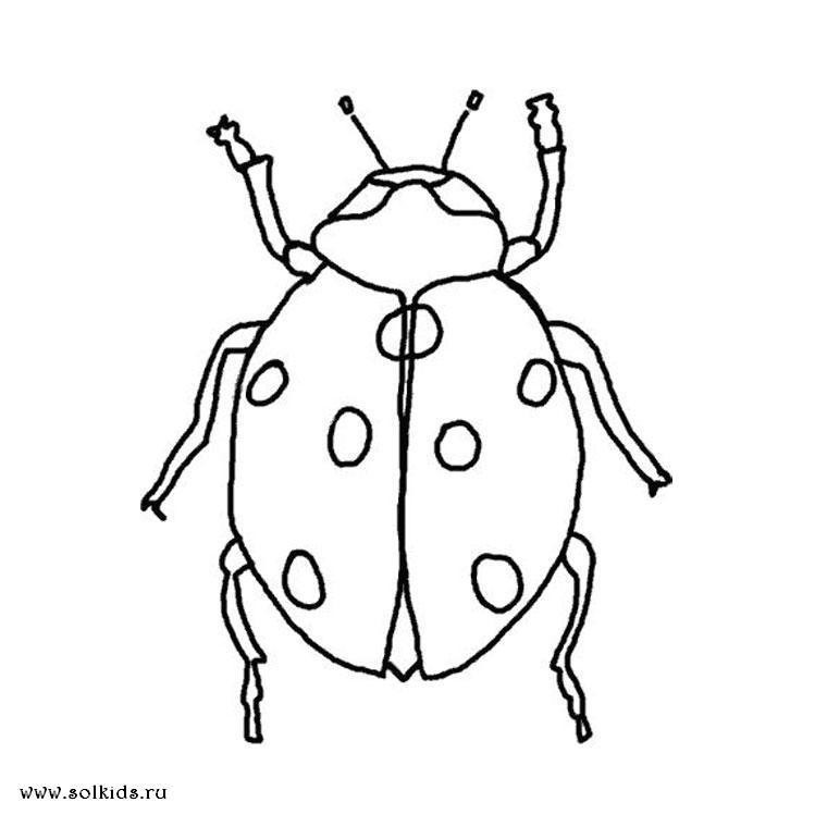 Раскраска насекомые