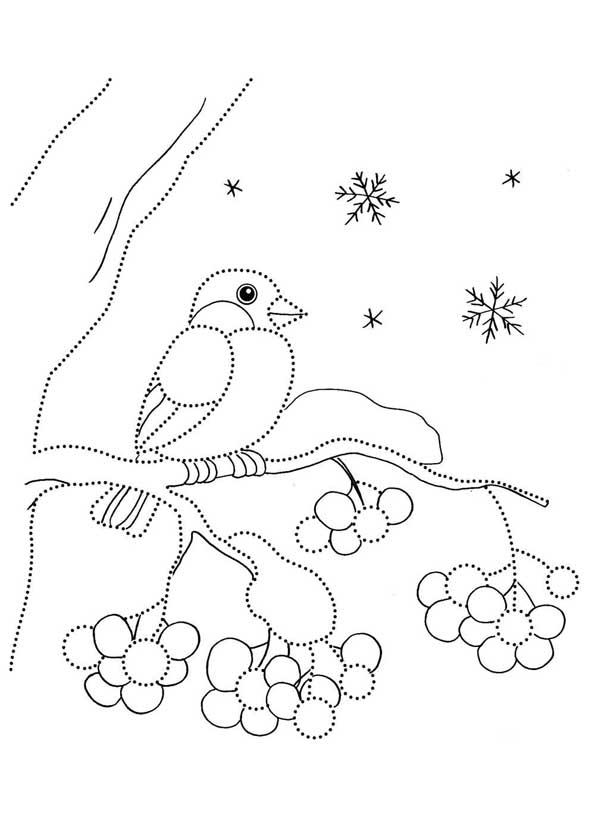 Раскраска зима снегирь