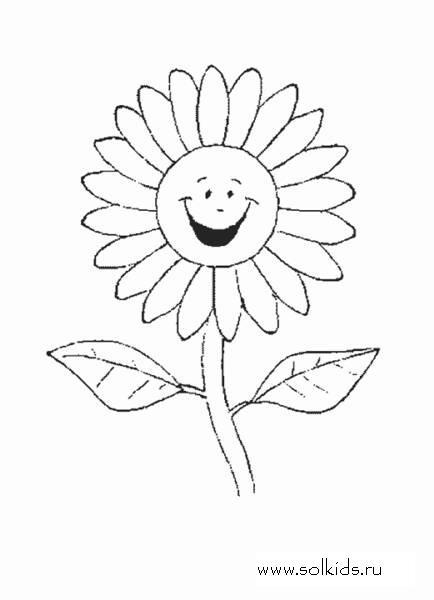 Картинка ромашка раскраска для детей