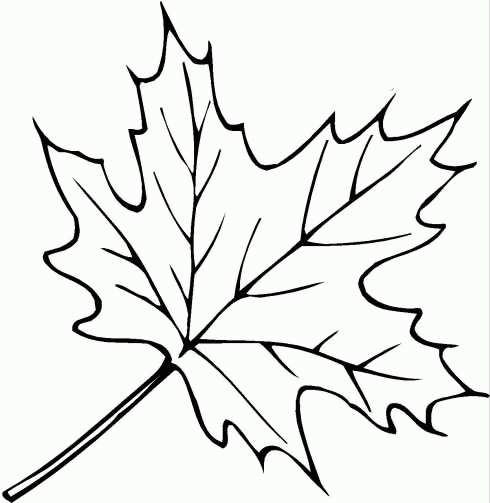 Раскраска осенние листья деревьев