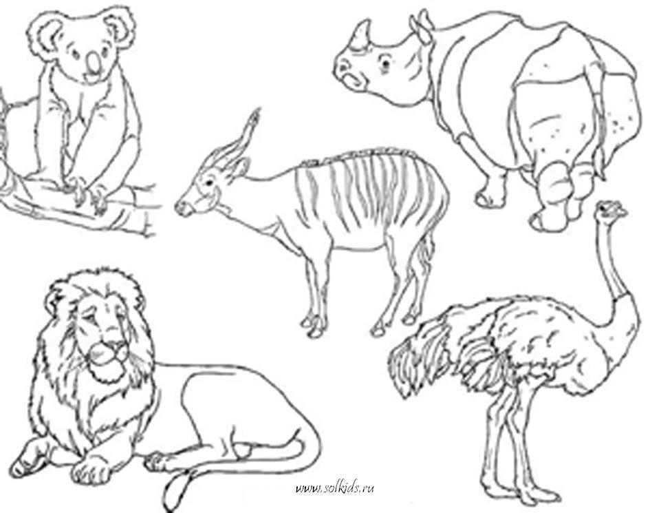 Раскраски для девочек животные
