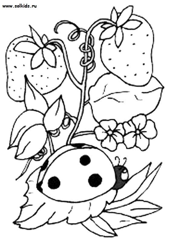 раскраски божья коровка на цветке