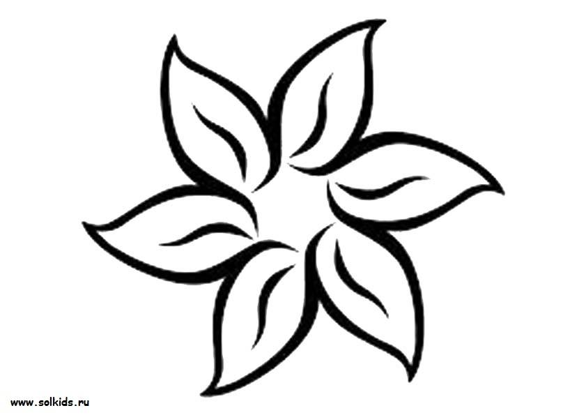 раскраски лепестки цветов